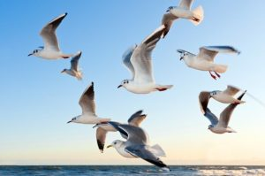 Gulls Bird Flying Sea Sky Water Water Bird