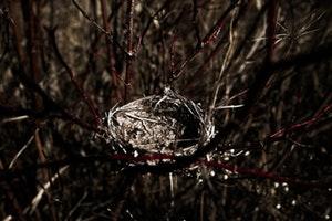 Bird's Nest, Relationships Advice for the Empty Nest