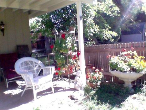 Serene Backyard Scene Gratitude as a Choice